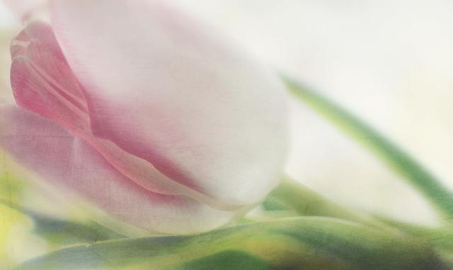 erotic-flower-heike-hultsch